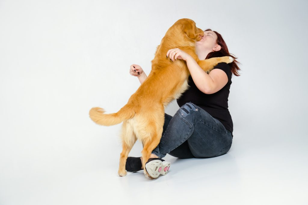 karakter nova scotia duck tolling retriever