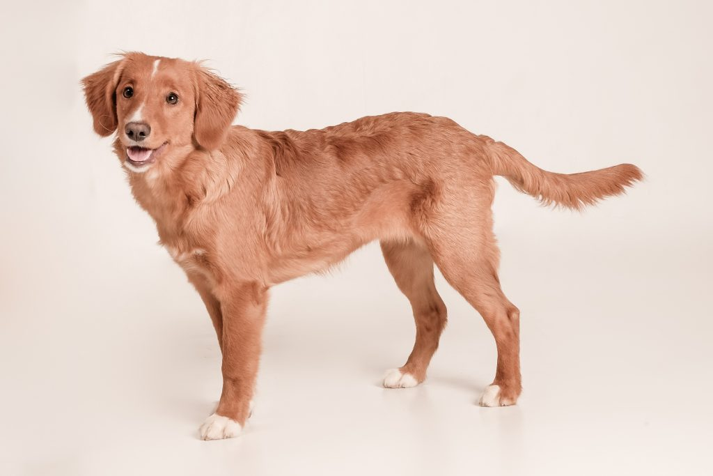 Gezondheid hond staat voorop